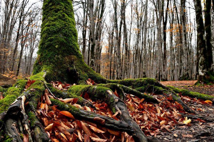 تور یکروزه جنگل راش مرسی سی